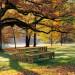 picnic Parkbank