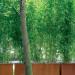 bambu pflanztröge