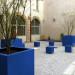dahlia  blue Pflanzentrog