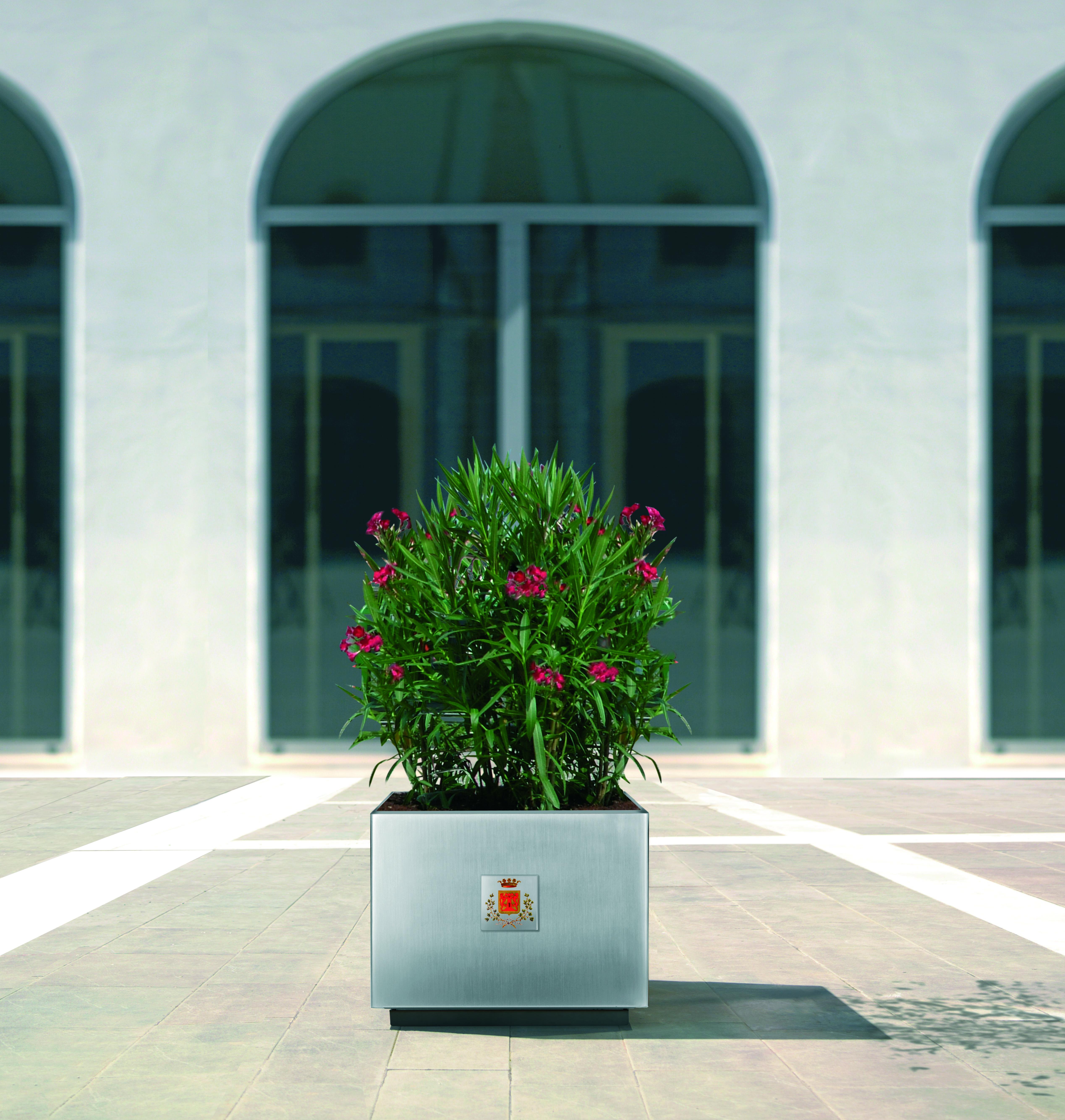 dahlia_Pflanzenbehälter